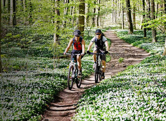 Bikers riding on a path in the woods